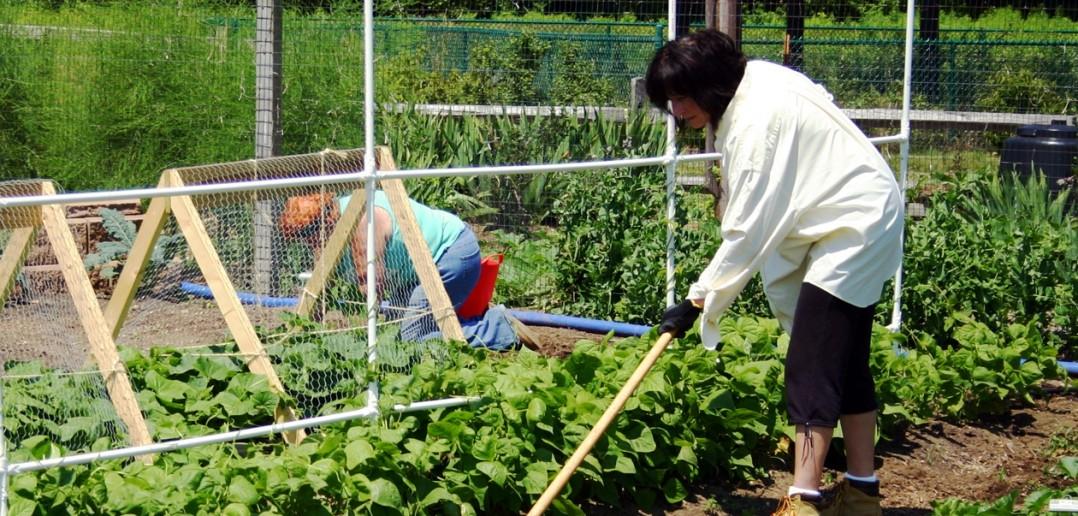 Purdue Master Gardener Program Seeking New Crop Of Volunteers Master Gardeners Of Delaware County